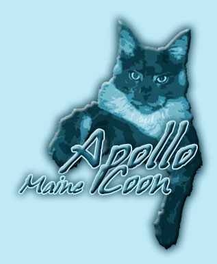 ApolloCoon - Maine Coon Cats